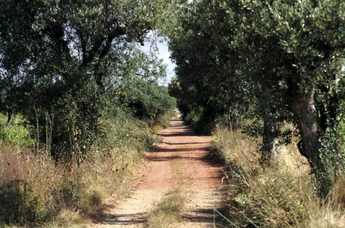 Camino de Santiago por la Beira Litoral