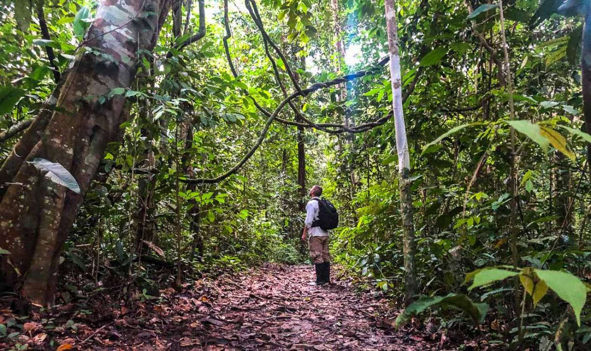 Reserva nacional Allpahuayo-Mishana