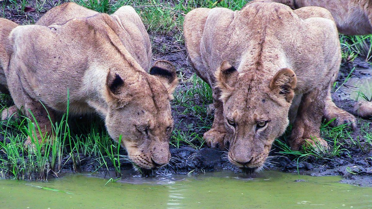 Safari en el Masai Mara (Kenia)