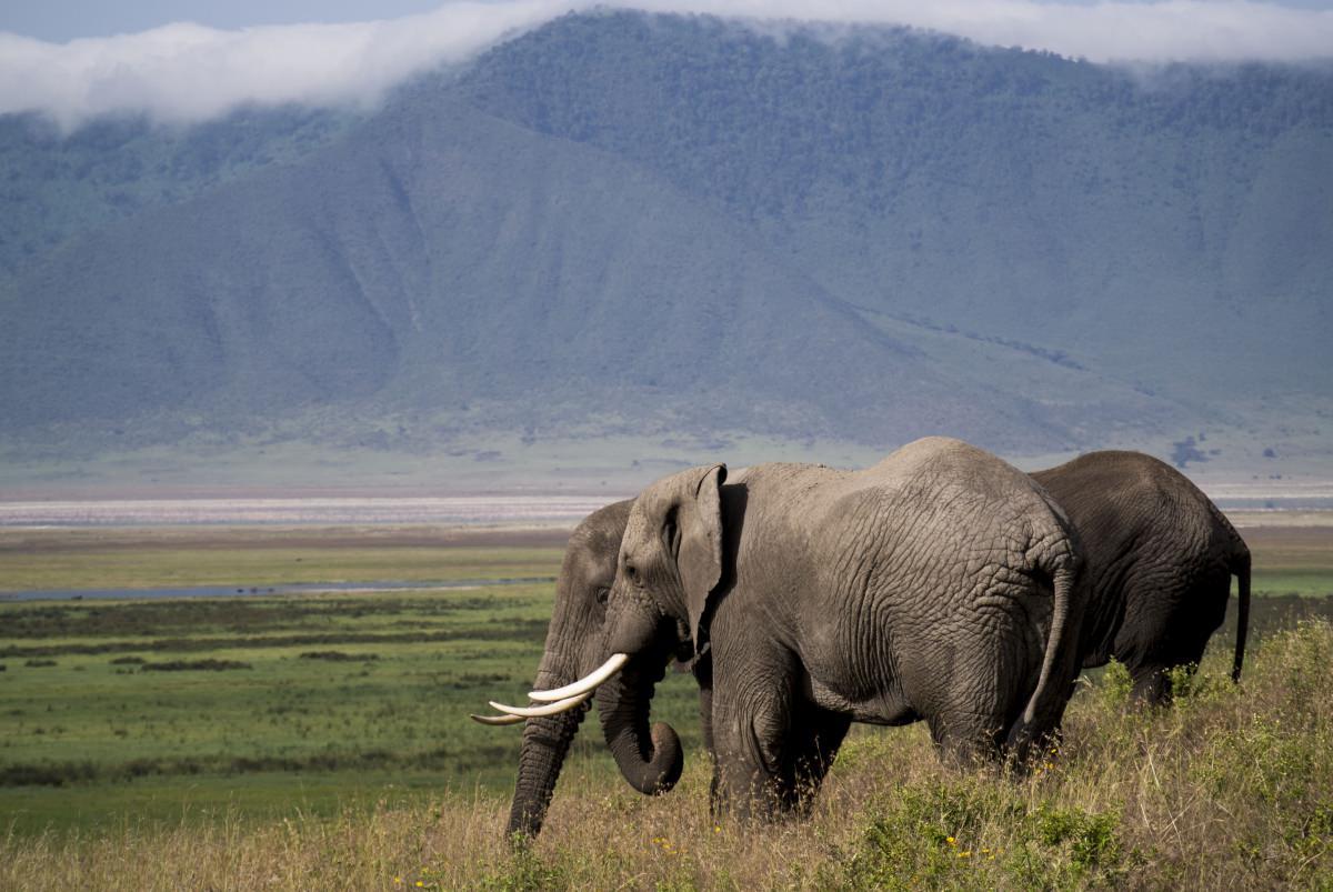 Safari en el Ngorongoro (Tanzania)
