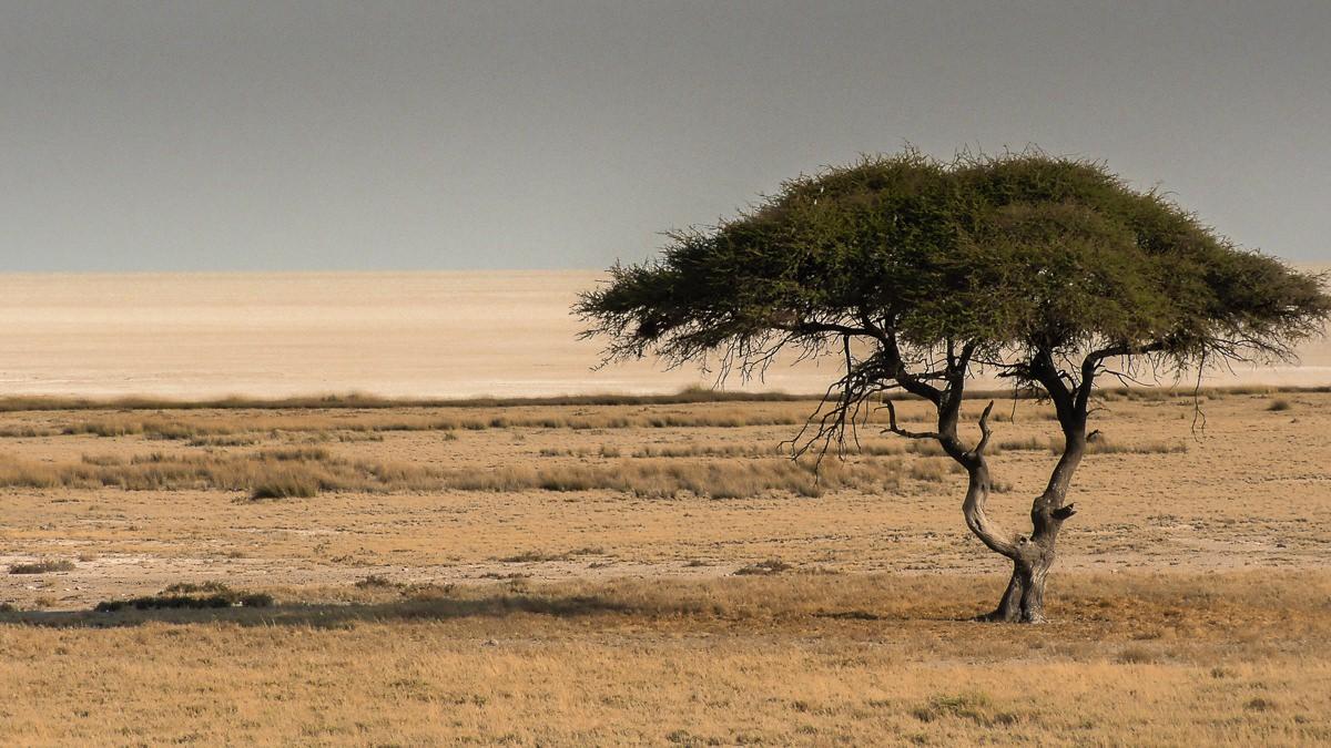 Safari en el parque nacional Etosha (Namibia)