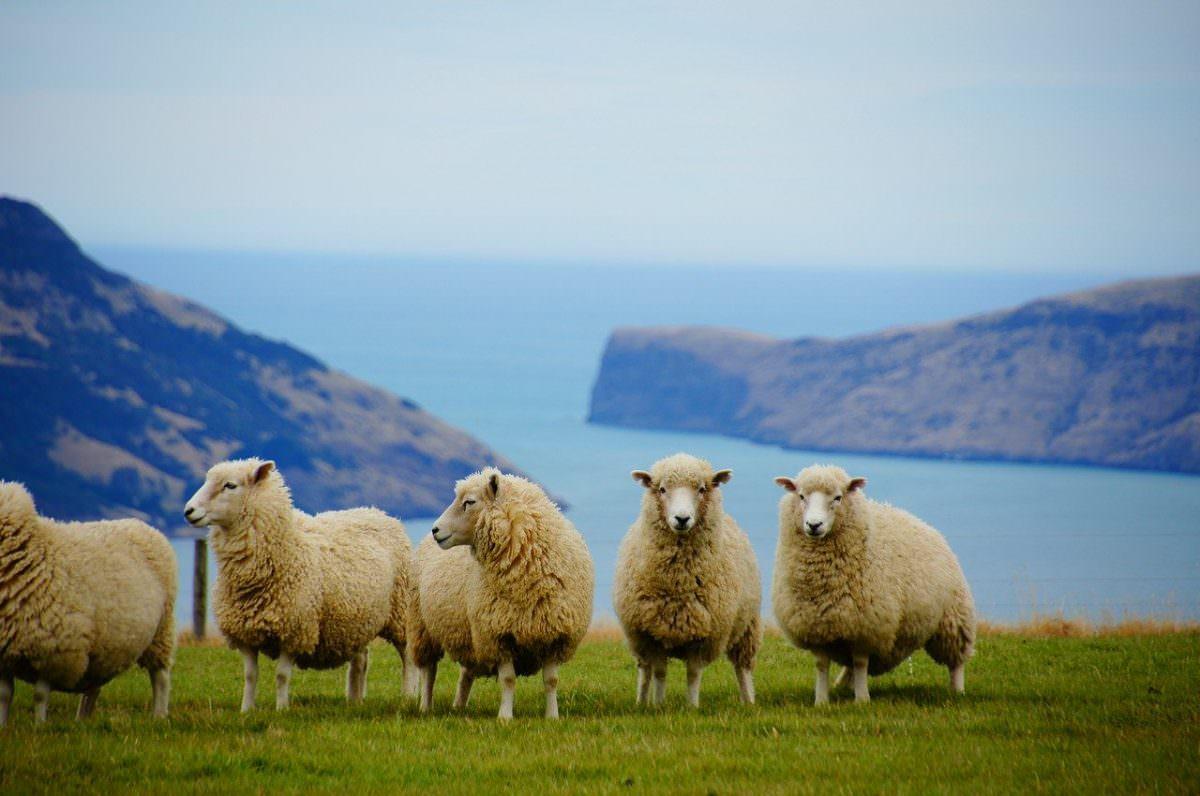 30 curiosidades de Nueva Zelanda, el país que ha hecho de la lejanía una razón de ser