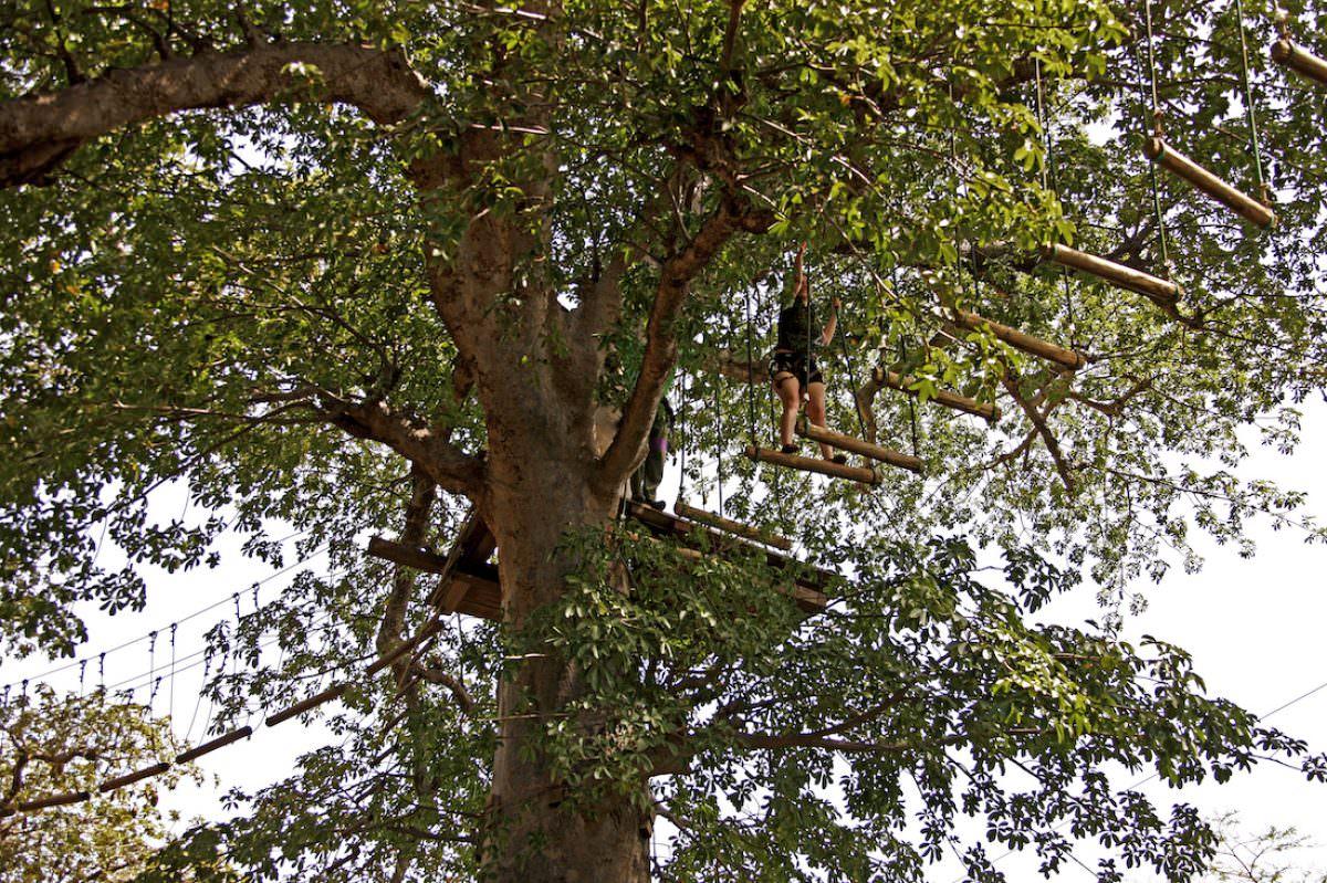 Accro Baobab