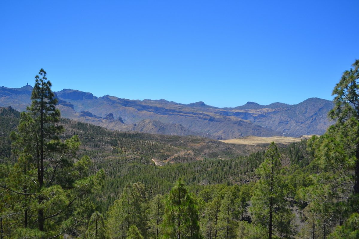 El parque natural de Tamadaba