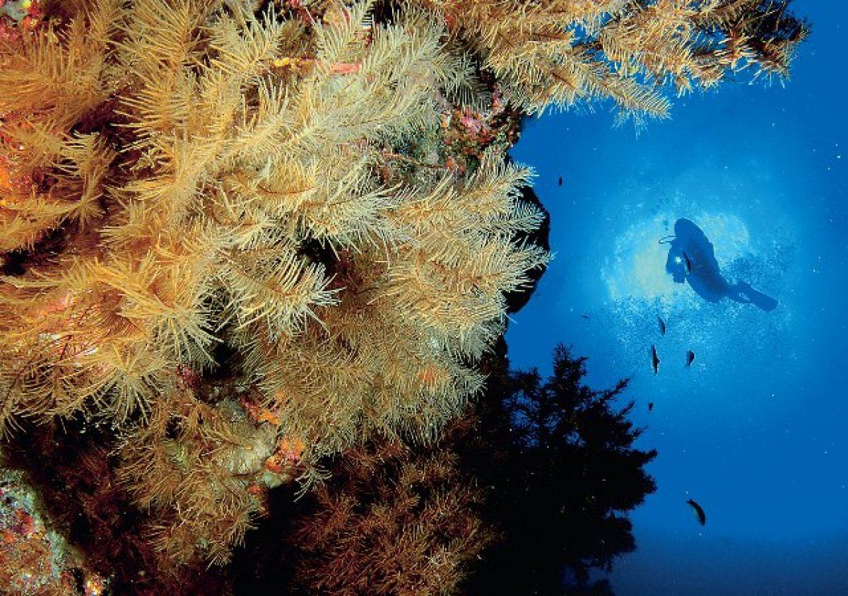 Buceo en La Palma