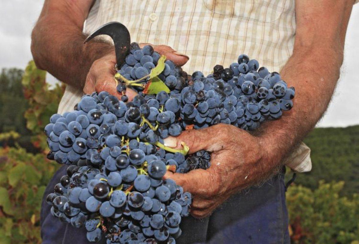 Ruta del vino del Campo de Borja