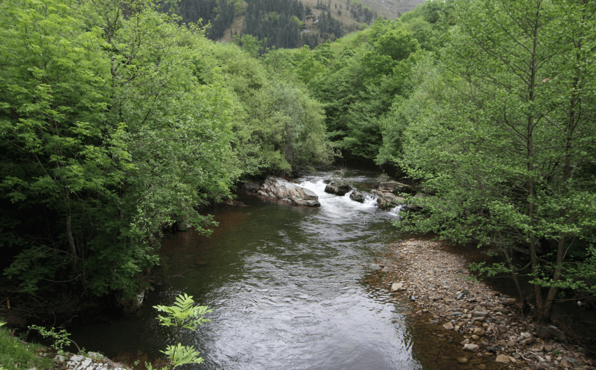 La reserva del Saja-Nansa