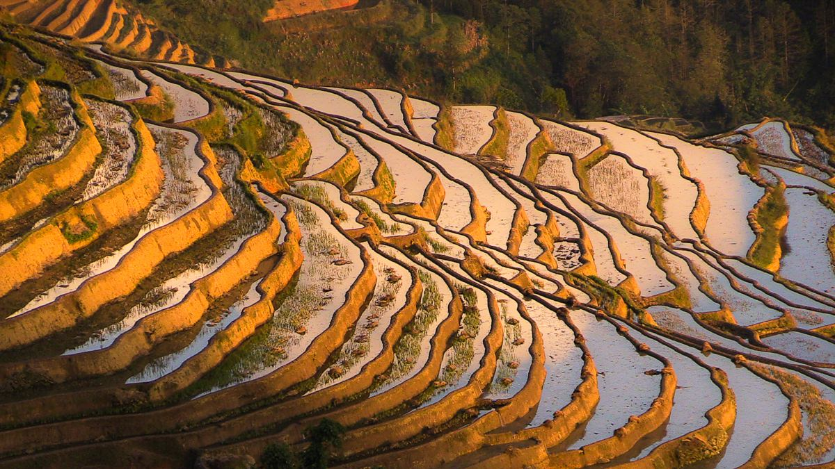 Terrazas de Yuanyang
