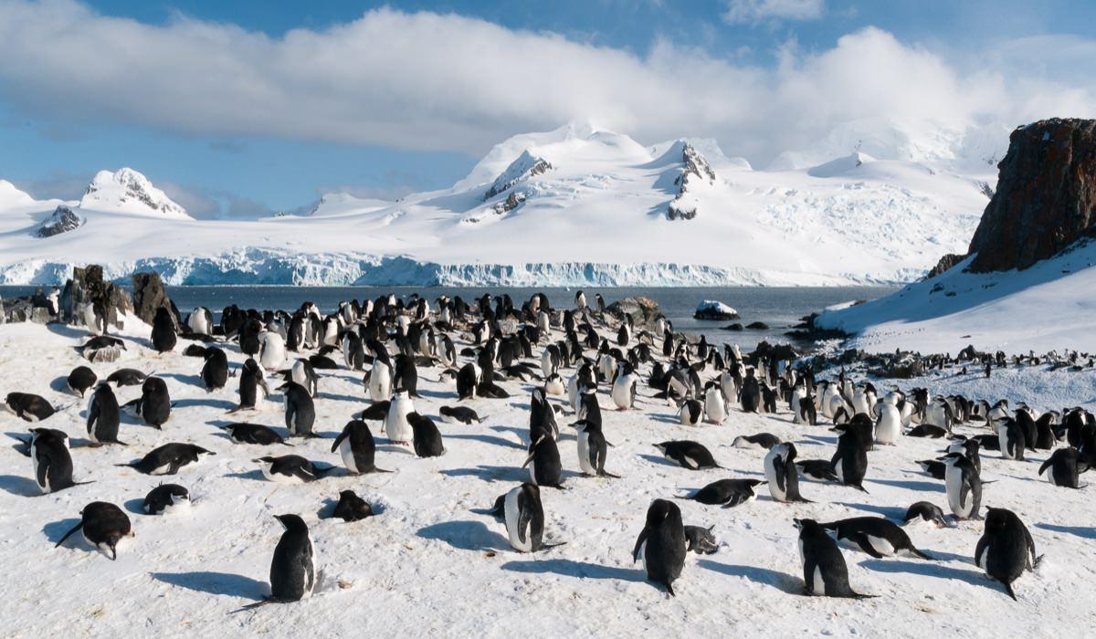 La sorprendente vida de los pingüinos