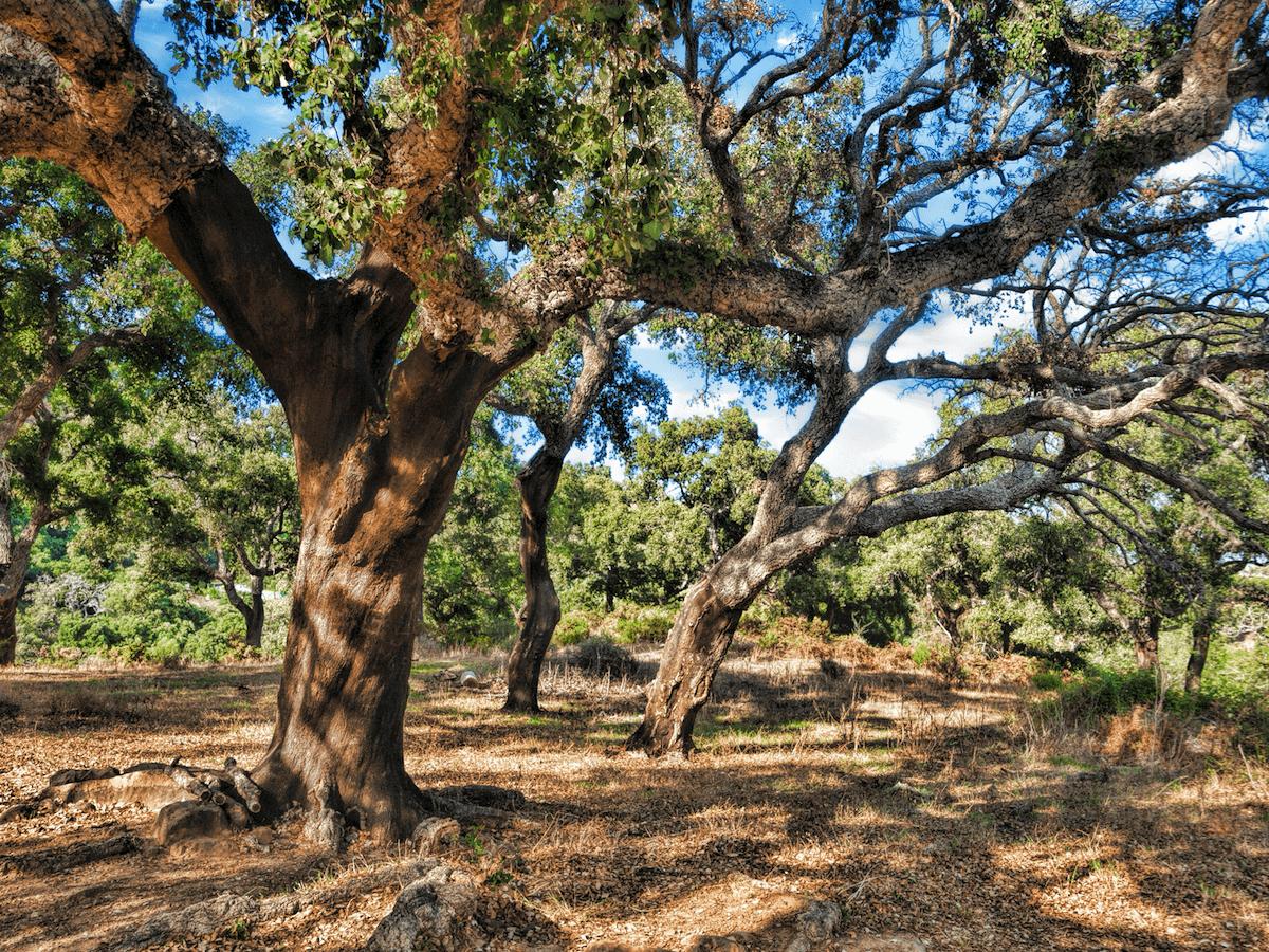 Los Alcornocales (Cádiz)
