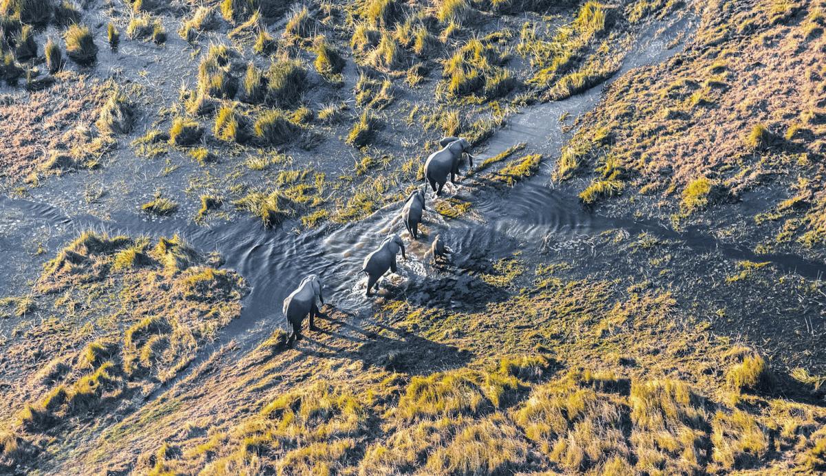 En avioneta por el delta del Okavango