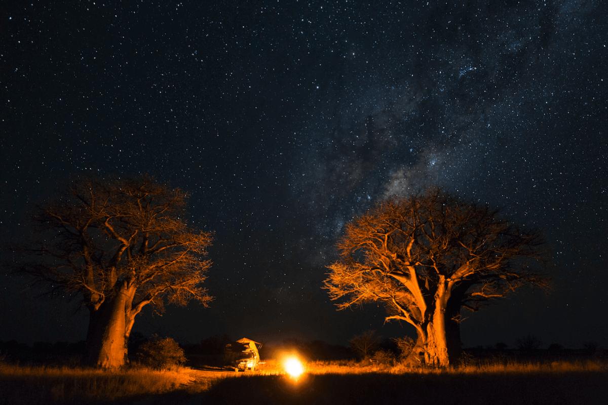 Bosques de baobab