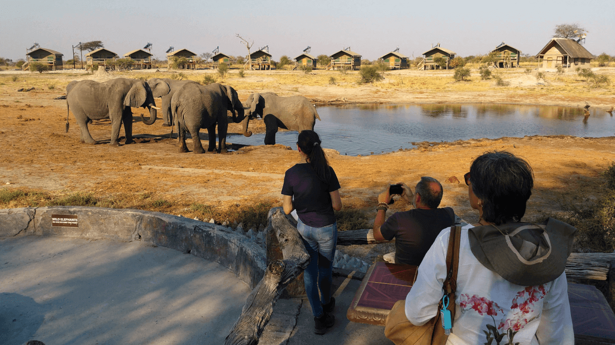 Elefantes en el corredor Trans-Kalahari