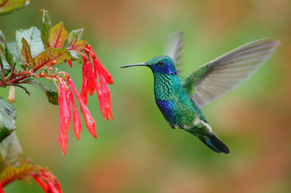 Colibrís y aves en Ecuador