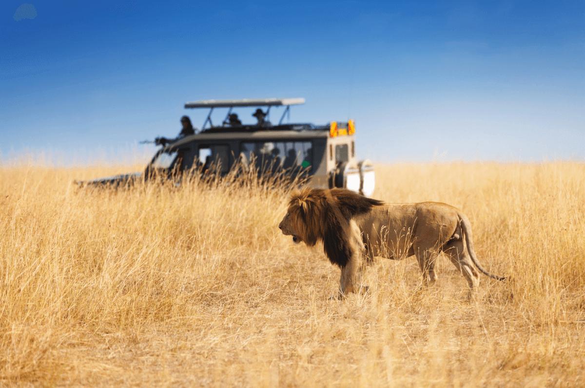 Safaris por África