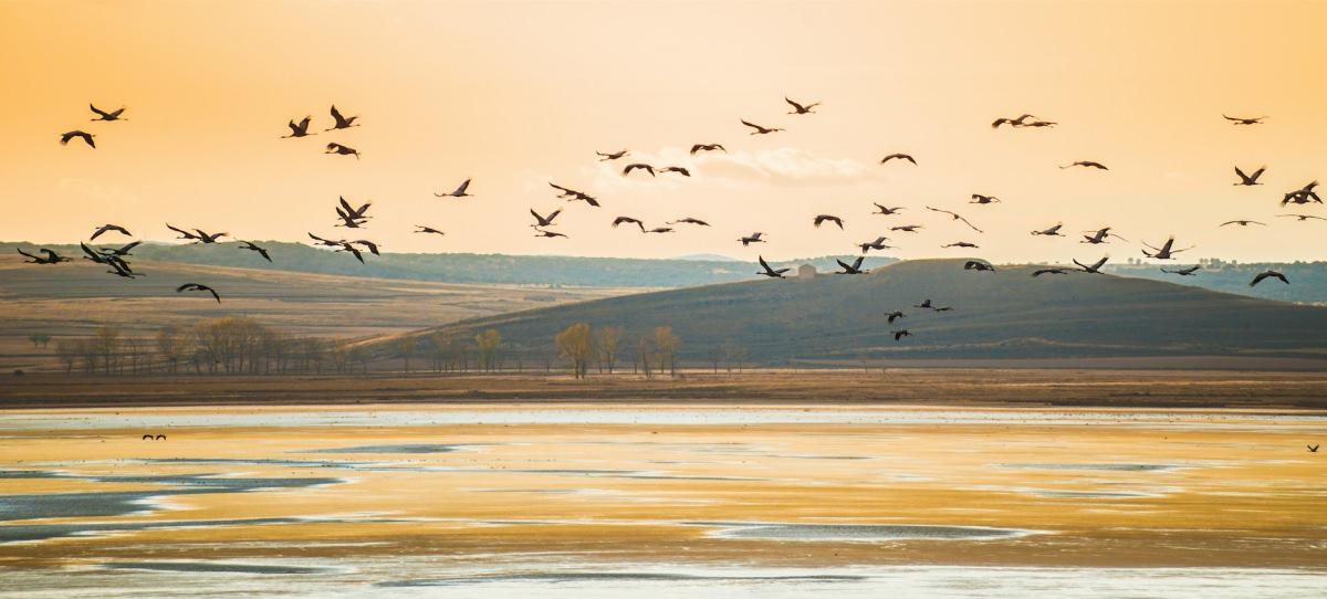 Aves migradoras en España