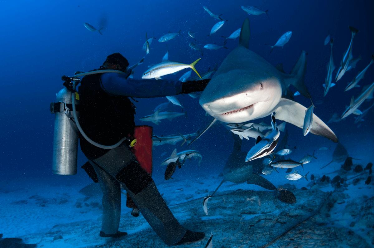 Bucear con el tiburón toro en Playa del Carmen