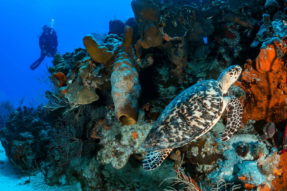 Buceo en el Parque Nacional de los Arrecifes de Cozumel