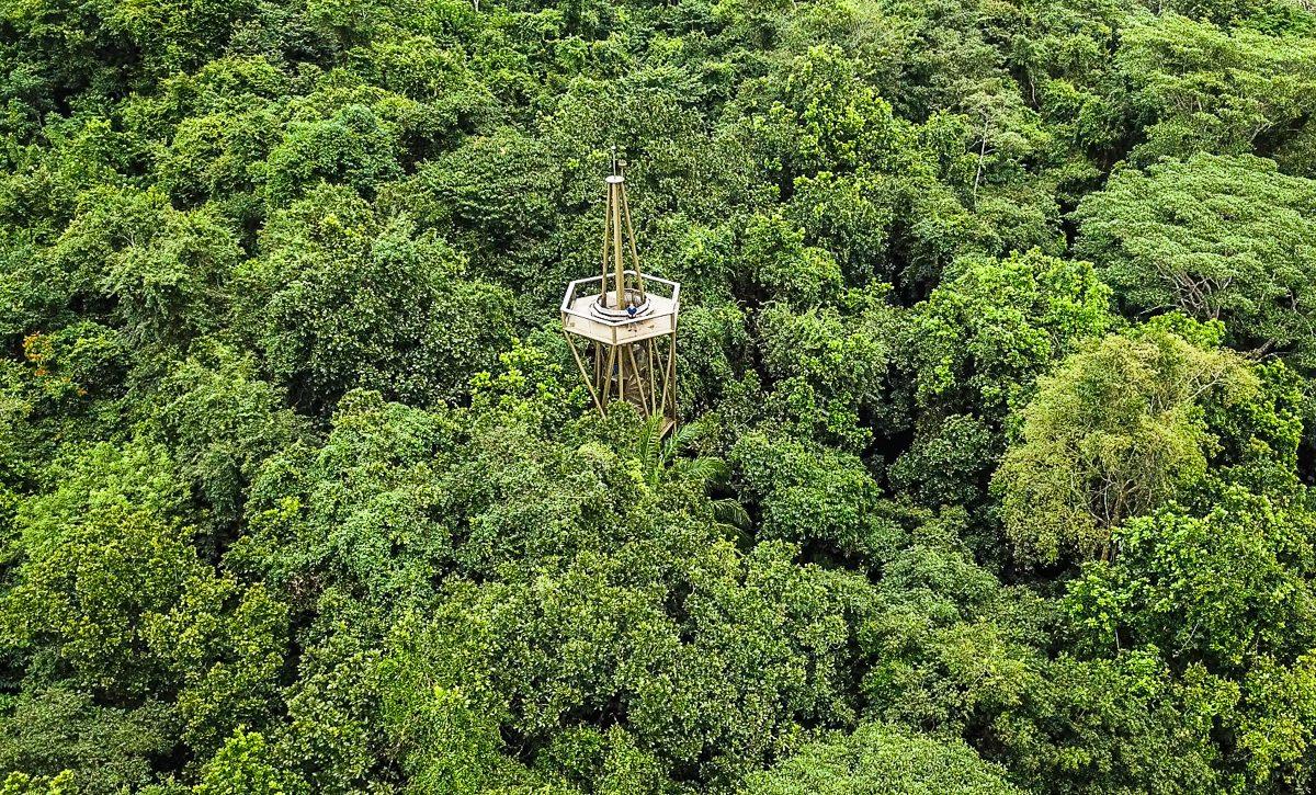 Bosque tropical lluvioso (Panamá)