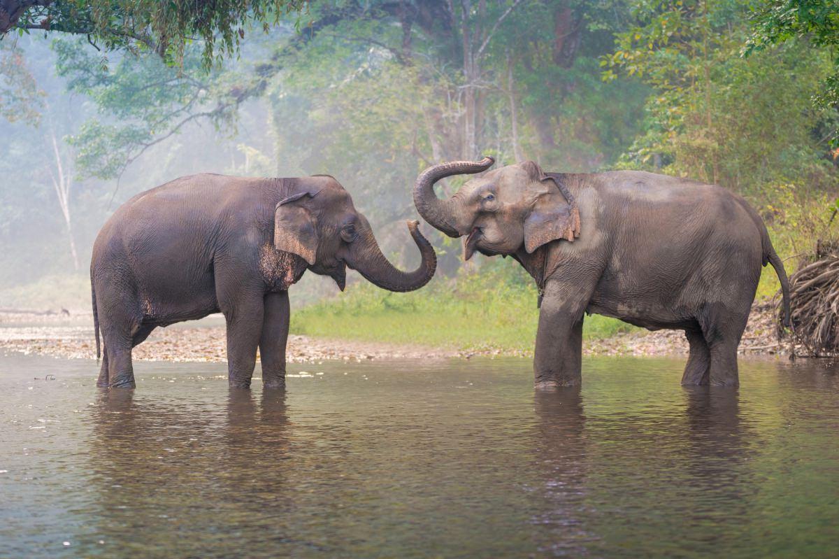 Santuario de elefantes Elephants Hills