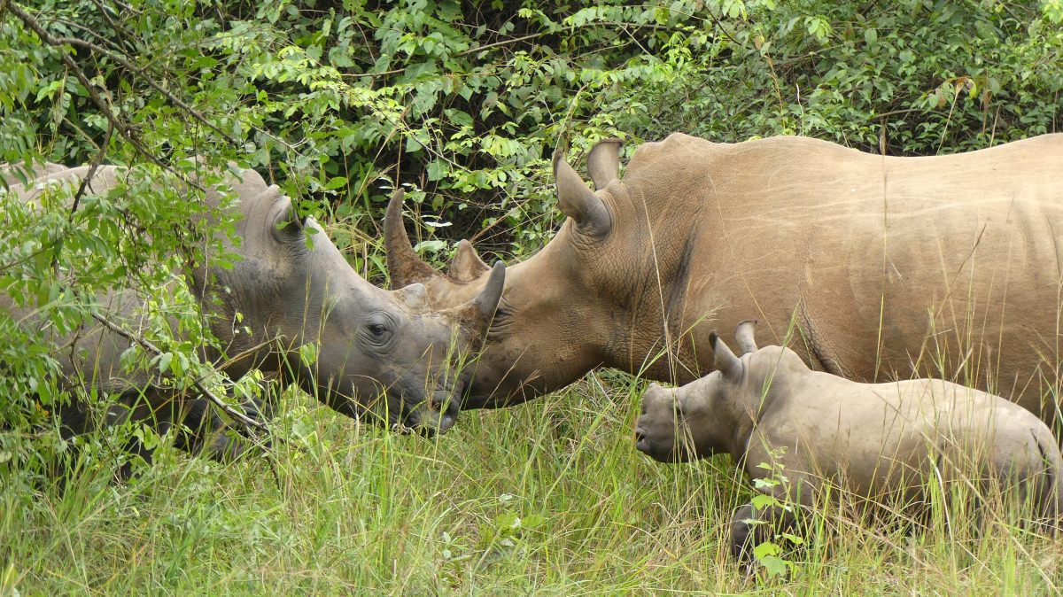 Ziwa Rhino and Wildlife Ranch
