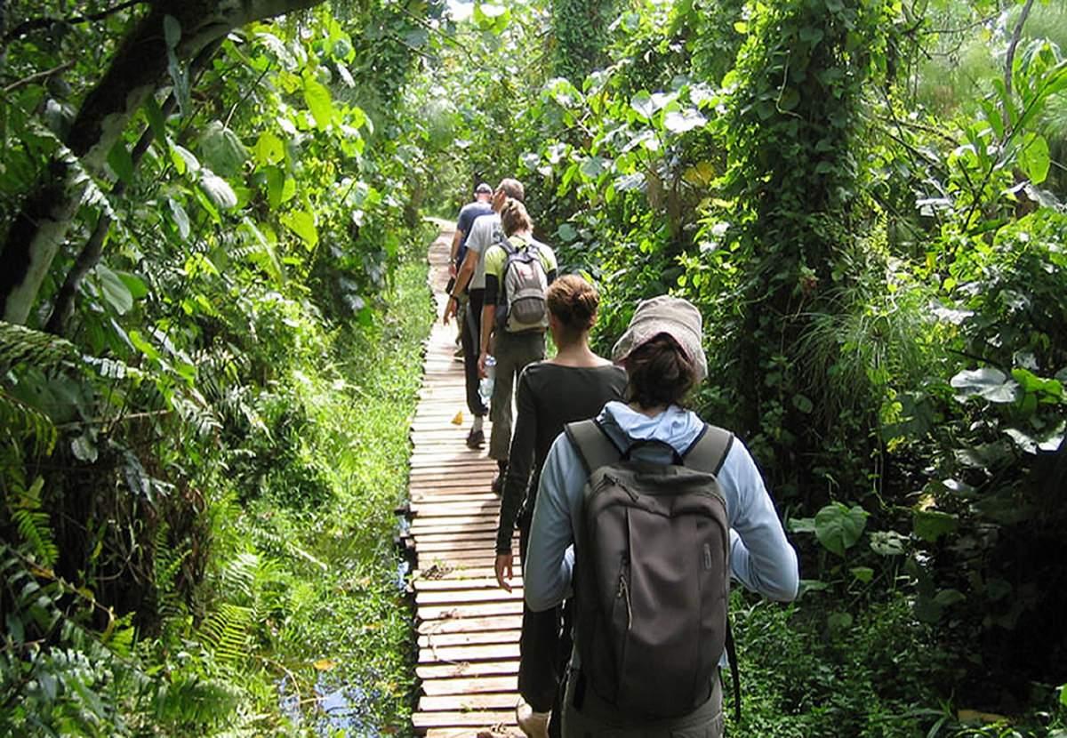 Bosque de Budongo