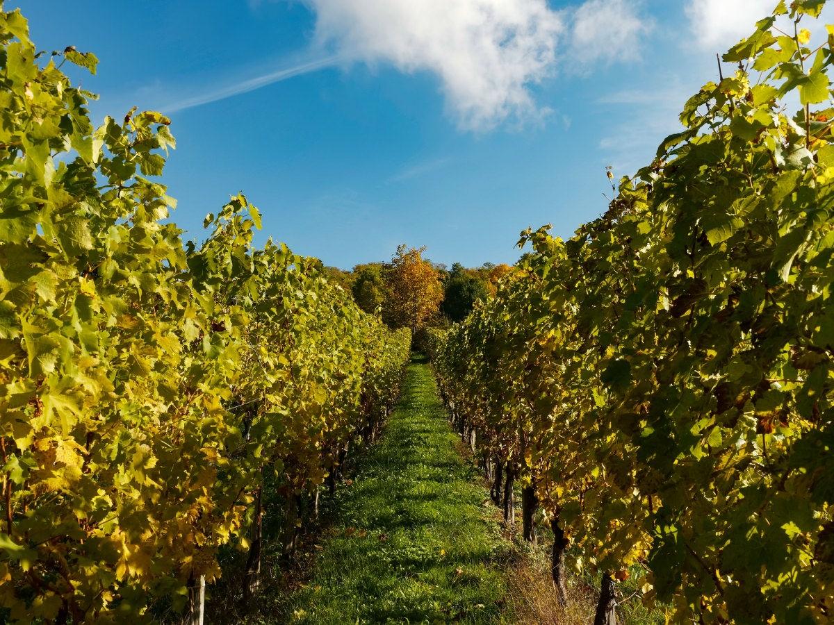 La Ruta del Vino Somontano