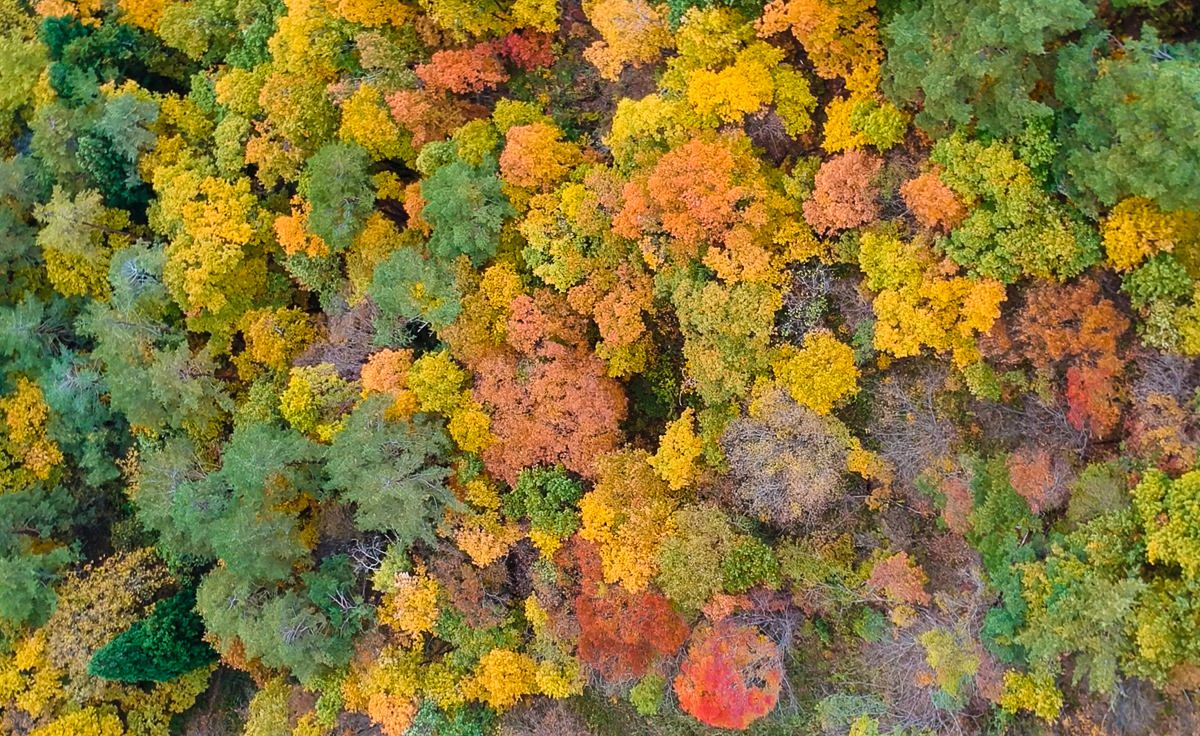 El otoño en los Alpes japoneses