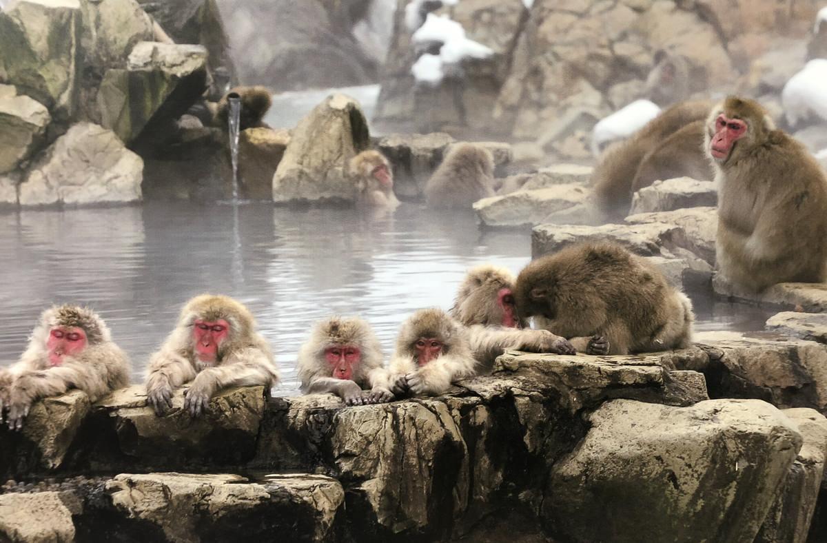 Jingokudani, el hogar de los monos de nieve