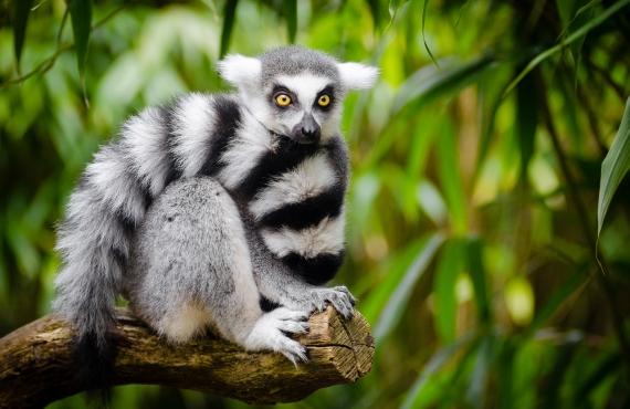 Sitios que ver en el sur de Madagascar