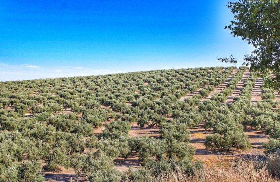 Caminos de Pasión: una ruta por 10 pueblos del interior de Andalucía