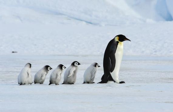 Antártida: el mejor viaje de mi vida