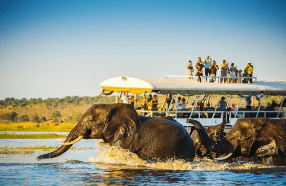 Sitios que ver en un safari por Botswana