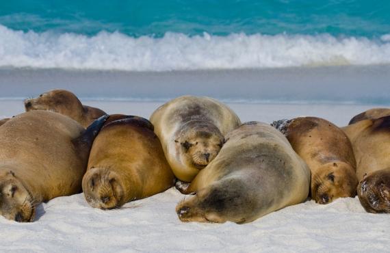 La otra cara de las islas Galápagos