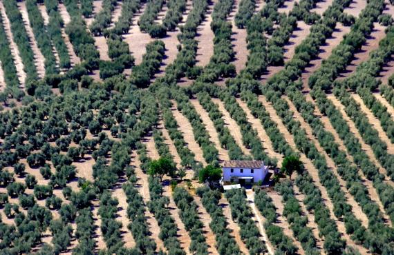 Ruta por los pueblos barrocos de la campiña de Córdoba